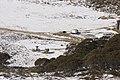Kosciuszko National Park NSW 2627, Australia - panoramio (223).jpg
