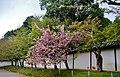 Kyoto Daigo-ji Kirschblüte.jpg