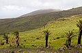 La Gomera 16 (8548557655).jpg