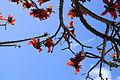 La Palma - Los Llanos - Carretera a Puerto Naos - Parque Antonio Gómez Felipe (Morera) 72 ies.jpg