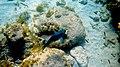 Laika ac Playa Kalki (11880031564).jpg