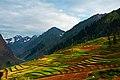 Lalazar fields - Naran Valley.jpg