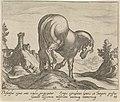 Landschap met paard Paardenrassen (serietitel), RP-P-OB-24.404.jpg