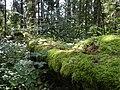 LasWarminski drzewo Jelgun.JPG