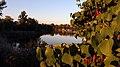 Las Lagunas de las Madres - Concurso Wiki Loves Earth 2016.jpg