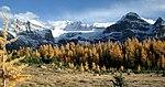 Layers of Autumn.jpg