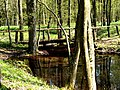 Leśny staw - panoramio (3).jpg