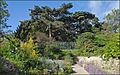 Le jardin alpin (muséum national dhistoire naturelle) (3544040472).jpg