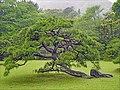 Le jardin du grand sanctuaire shintoïste d'Ise (Japon) (42212995765).jpg