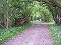 Leafy track near Daggans - geograph.org.uk - 444507.jpg