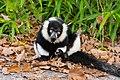 Lemur (36790283284).jpg