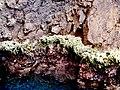 Les coraux dans la grotte des amoureux.jpg