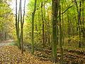 Les u potoka v Modřanské rokli.JPG