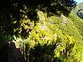 Levada 25 Fontes, Madeira, Portugal, June-July 2011 - panoramio (48).jpg