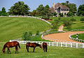 Lexington Kentucky - Donamire Farm (3570956257) (2).jpg