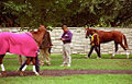 "Lexington Kentucky - Keeneland Race Track ""Paddock"" (2144592743) (2).jpg"