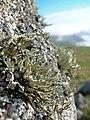 Lichen (brian-m).jpg
