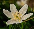 Little Flower (252942047).jpeg