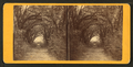 Live Oak Avenue, Bonaventure, from Robert N. Dennis collection of stereoscopic views 2.png