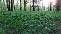 Lobnya, Moscow Oblast, Russia - panoramio (12).jpg