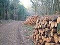 Logs in Big Covert - geograph.org.uk - 153377.jpg