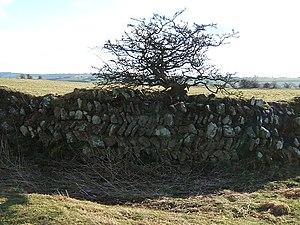 Longovicium - Roman walls of Longovicium