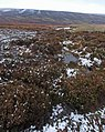 Looking towards Ewden Beck valley from Broomhead Moorland - geograph.org.uk - 1598322.jpg