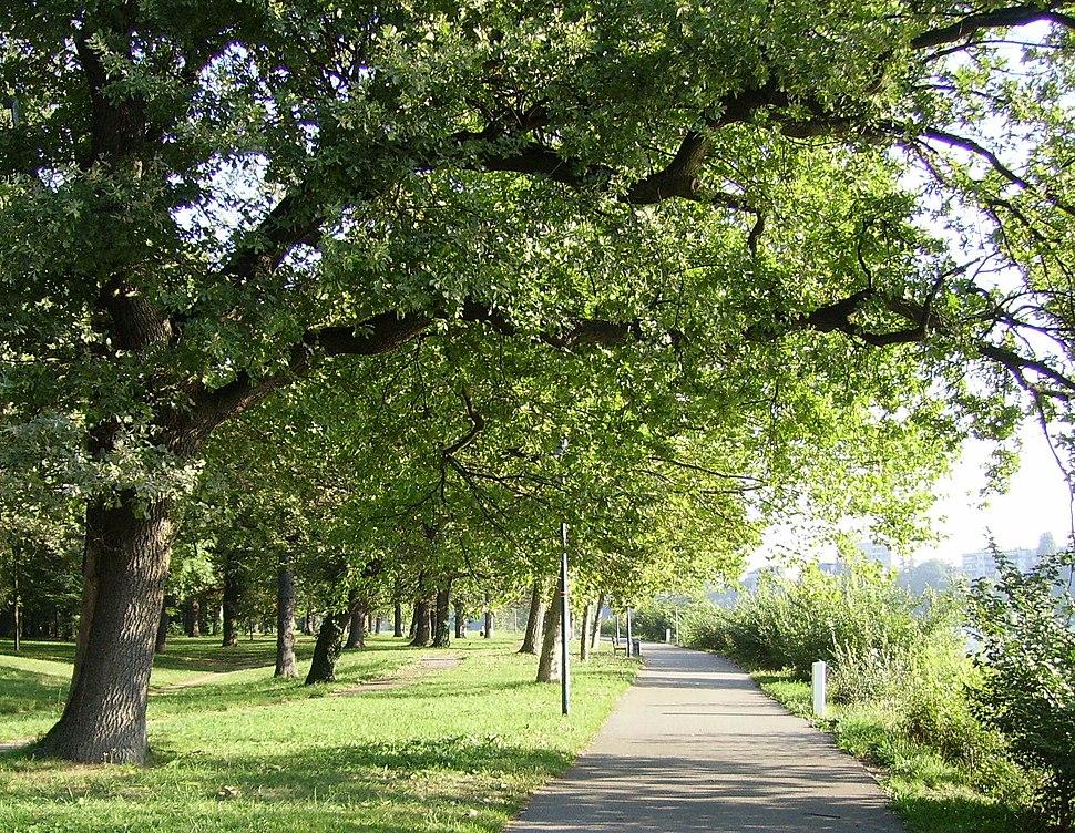 Ludwigshafen Parkinsel Weg.jpg