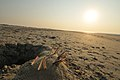 M^m Walking in the beach in Holland - Creative Commons by gnuckx - panoramio (3).jpg