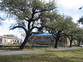 Magnolia Projects Feb 2009 A.JPG