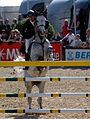 Maimarkt Mannheim 2014 - 51. Maimarkt-Turnier-140.JPG
