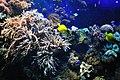 Marine fish (5791775758).jpg