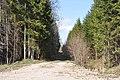 Meža ceļš, Ogresgala pagasts, Ogres novads, Latvia - panoramio (9).jpg