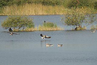 Meißendorf Lakes and Bannetze Moor