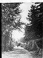 Memorial Drive Mount Gambier(GN07970).jpg