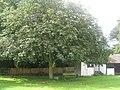 Memorial Tree, beside Pluckey Cricket Scorebox - geograph.org.uk - 1426366.jpg