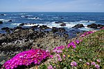 Mendocino Coast Botanical Gardens1.jpg