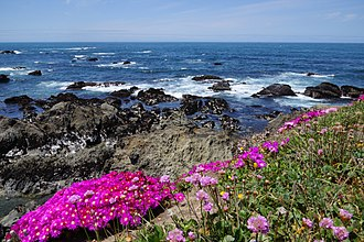 Mendocino Coast Botanical Gardens - Image: Mendocino Coast Botanical Gardens 1