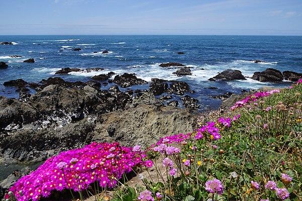 Parks in mendocino county california - Mendocino coast botanical gardens ...