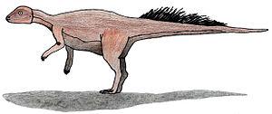 Le micropachycéphalosaure ressemblait peut-être à ça.