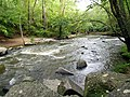 Mill Trail Umstead NC SP 4324 (6641050185) (2).jpg