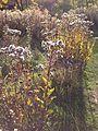 Minnehaha Park in autumn 15.jpg