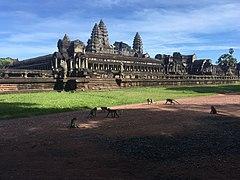 Monkeys near Angkor Wat.jpg