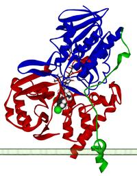Monoamine oxidase A 2BXS.png