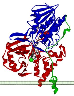 Monoamine oxidase - Image: Monoamine oxidase A 2BXS