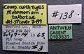 Monomorium talbotae casent0103531 label 1.jpg