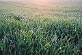 Morning Dew (209887635).jpeg