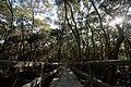 Morning Mist On The Mangroves.jpg