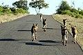 Mosetlha, Madikwe Game Reserve, South Africa (46812077472).jpg