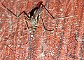 Mosquito's zoom picture.jpg